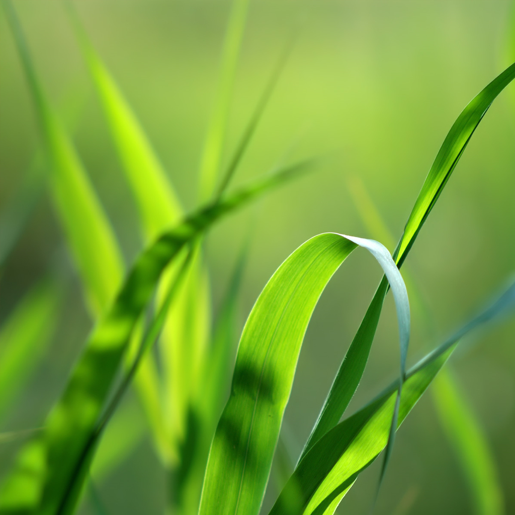 blades-of-grass-png